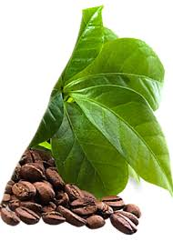 Green Coffee Ultra opiniones - foro, comentarios, efectos secundarios
